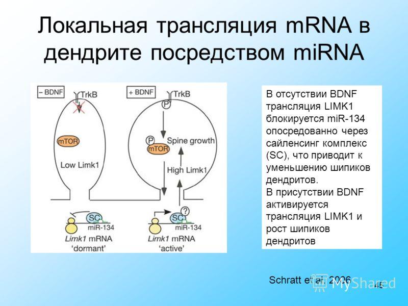 45 Локальная трансляция mRNA в дендрите посредством miRNA Schratt et al. 2006 В отсутствии BDNF трансляция LIMK1 блокируется miR-134 опосредованно через сайленсинг комплекс (SC), что приводит к уменьшению шипиков дендритов. В присутствии BDNF активир