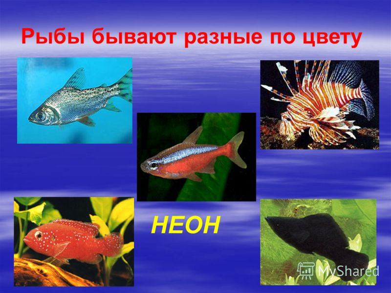 Рыбы бывают разные по цвету НЕОН