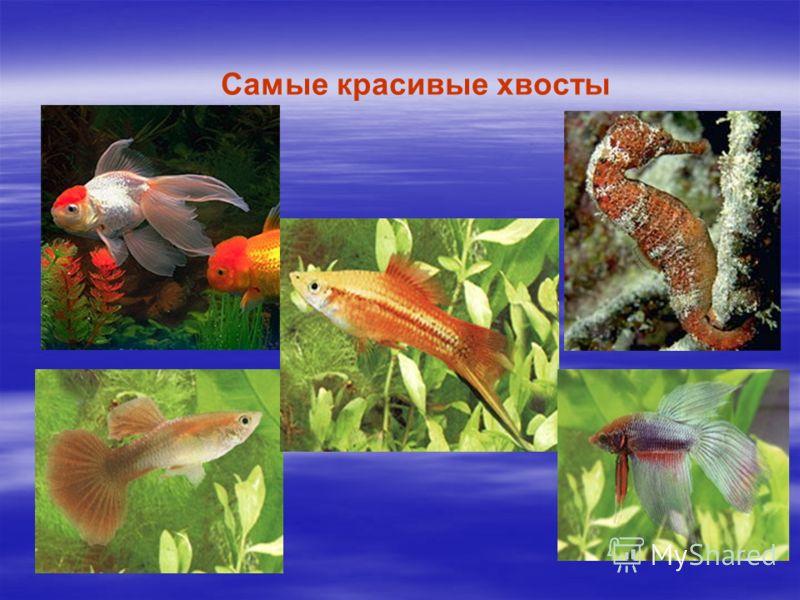 Чередниченко татьяна презентация