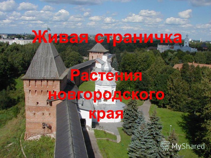 Живая страничка Растения новгородского края