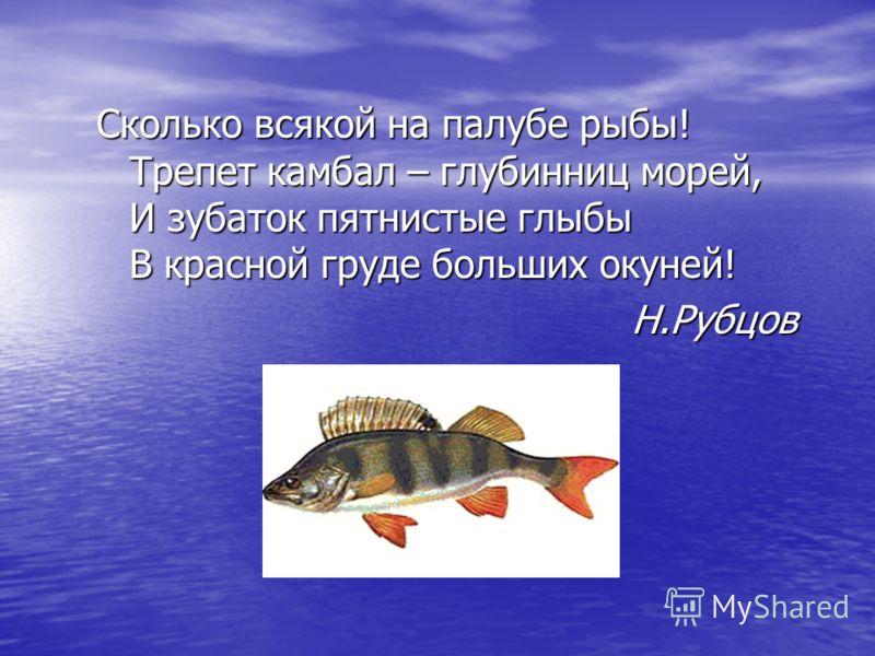 Сколько всякой на палубе рыбы! Трепет камбал – глубинниц морей, И зубаток пятнистые глыбы В красной груде больших окуней! Н.Рубцов Н.Рубцов