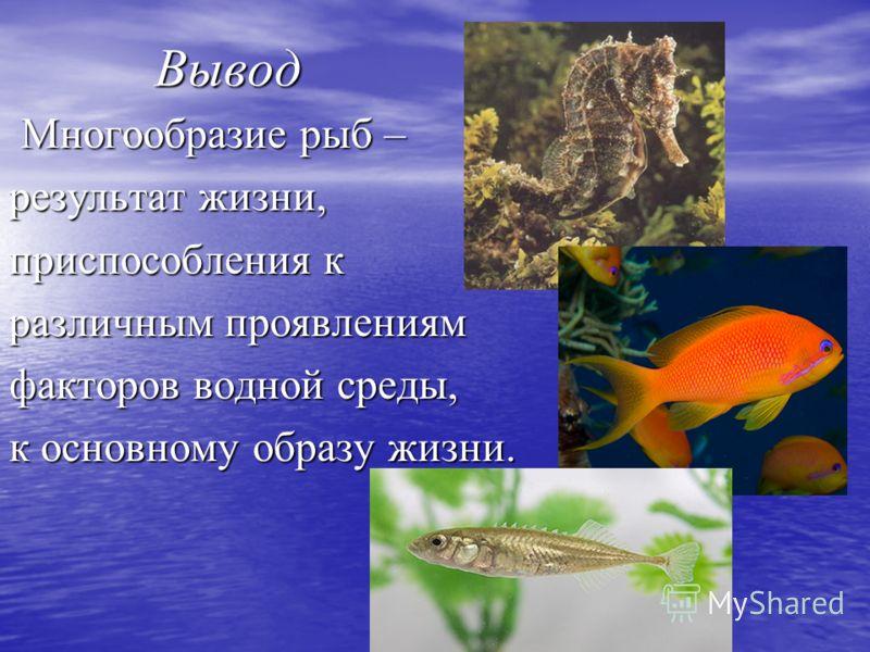 Вывод Вывод Многообразие рыб – Многообразие рыб – результат жизни, приспособления к различным проявлениям факторов водной среды, к основному образу жизни.
