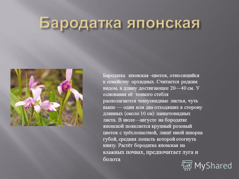 Бародатка японская - цветок, относящийся к семейству орхидных. Считается редким видом, в длину достигающее 2040 см. У основания её тонкого стебля располагаются чешуевидные листья, чуть выше один или два отходящих в сторону длинных ( около 10 см ) лан