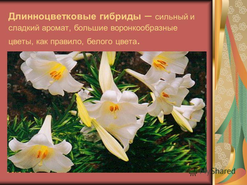 Длинноцветковые гибриды – сильный и сладкий аромат, большие воронкообразные цветы, как правило, белого цвета.