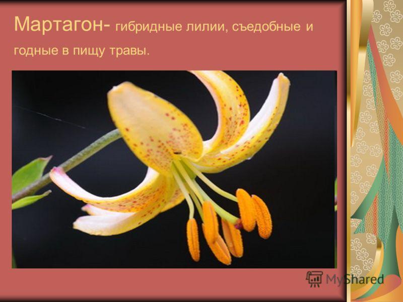 Мартагон- гибридные лилии, съедобные и годные в пищу травы.