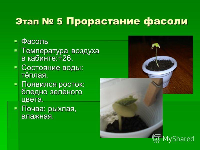 Этап 5 Прорастание фасоли Фасоль Фасоль Температура воздуха в кабинте:+26. Температура воздуха в кабинте:+26. Состояние воды: тёплая. Состояние воды: тёплая. Появился росток: бледно зелёного цвета. Появился росток: бледно зелёного цвета. Почва: рыхла