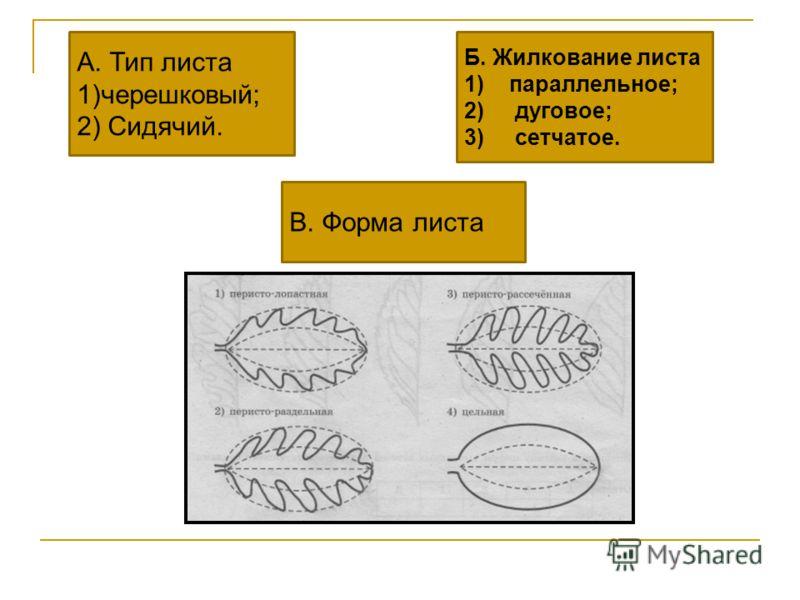 А. Тип листа 1)черешковый; 2) Сидячий. Б. Жилкование листа 1)параллельное; 2) дуговое; 3) сетчатое. В. Форма листа