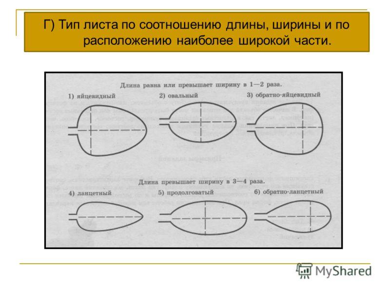 Г) Тип листа по соотношению длины, ширины и по расположению наиболее широкой части.