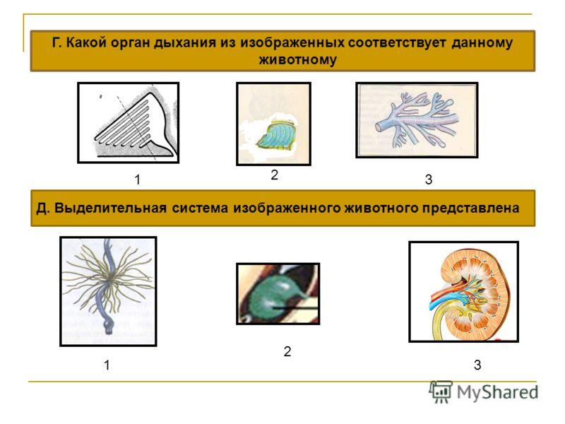 Г. Какой орган дыхания из изображенных соответствует данному животному 1 2 3 Д. Выделительная система изображенного животного представлена 1 2 3