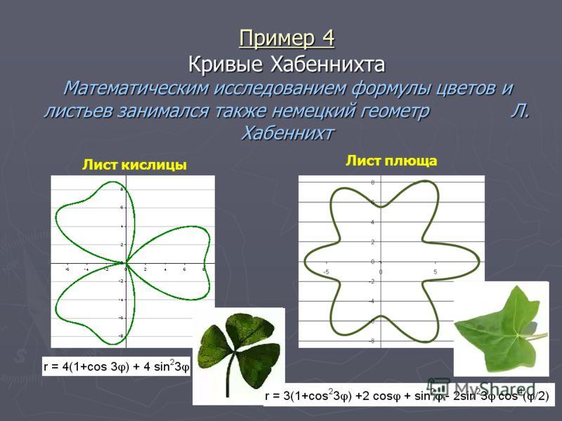 Пример 4 Кривые Хабеннихта Математическим исследованием формулы цветов и листьев занимался также немецкий геометр Л. Хабеннихт Лист кислицы Лист плюща