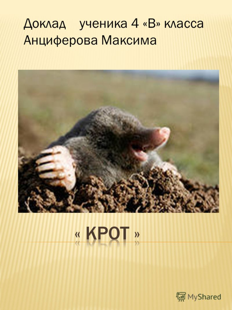 Доклад ученика 4 «В» класса Анциферова Максима