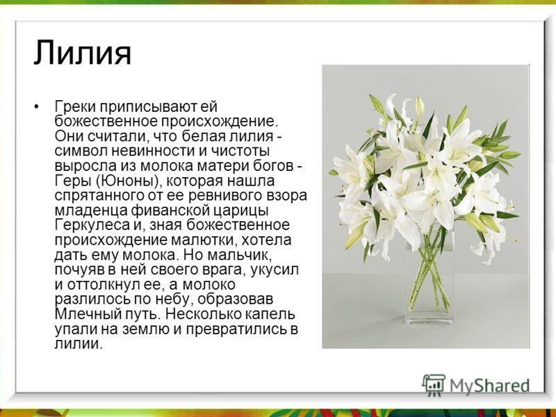 Лилия Греки приписывают ей божественное происхождение. Они считали, что белая лилия - символ невинности и чистоты выросла из молока матери богов - Геры (Юноны), которая нашла спрятанного от ее ревнивого взора младенца фиванской царицы Геркулеса и, зн