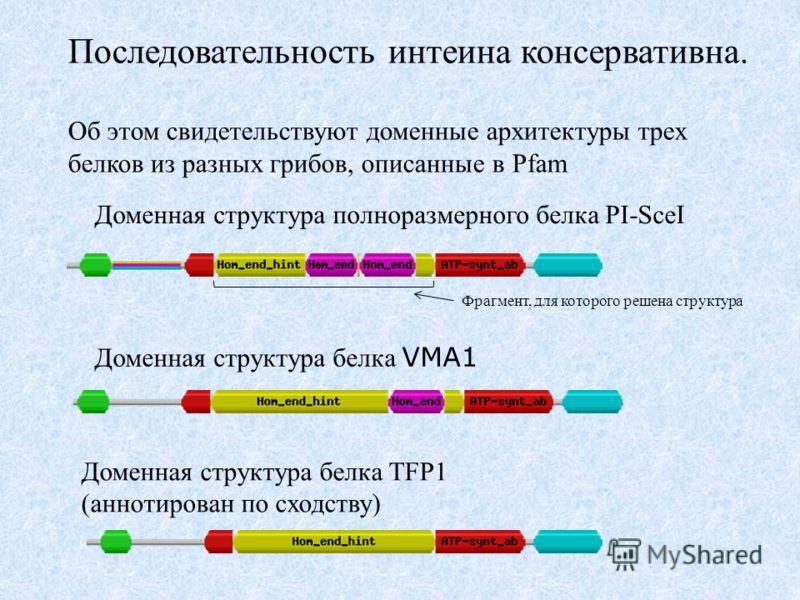 Последовательность интеина консервативна. Об этом свидетельствуют доменные архитектуры трех белков из разных грибов, описанные в Pfam Доменная структура полноразмерного белка PI-SceI Доменная структура белка TFP1 (аннотирован по сходству) Доменная ст