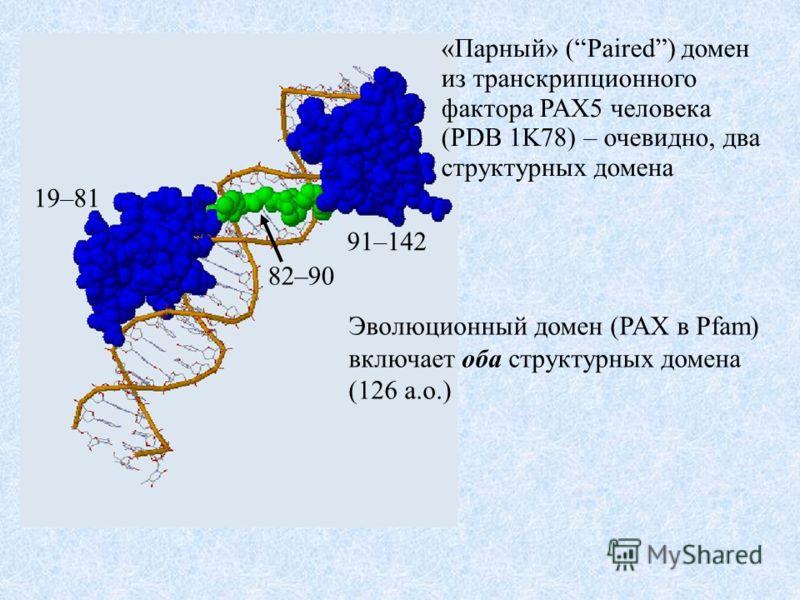 19–81 82–90 91–142 «Парный» (Paired) домен из транскрипционного фактора PAX5 человека (PDB 1K78) – очевидно, два структурных домена Эволюционный домен (PAX в Pfam) включает оба структурных домена (126 а.о.)