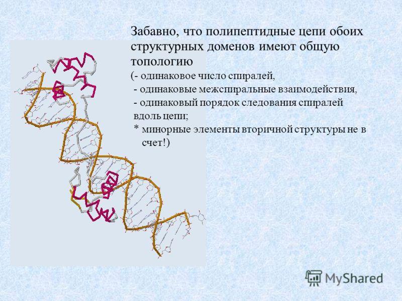 Забавно, что полипептидные цепи обоих структурных доменов имеют общую топологию (- одинаковое число спиралей, - одинаковые межспиральные взаимодействия, - одинаковый порядок следования спиралей вдоль цепи; * минорные элементы вторичной структуры не в