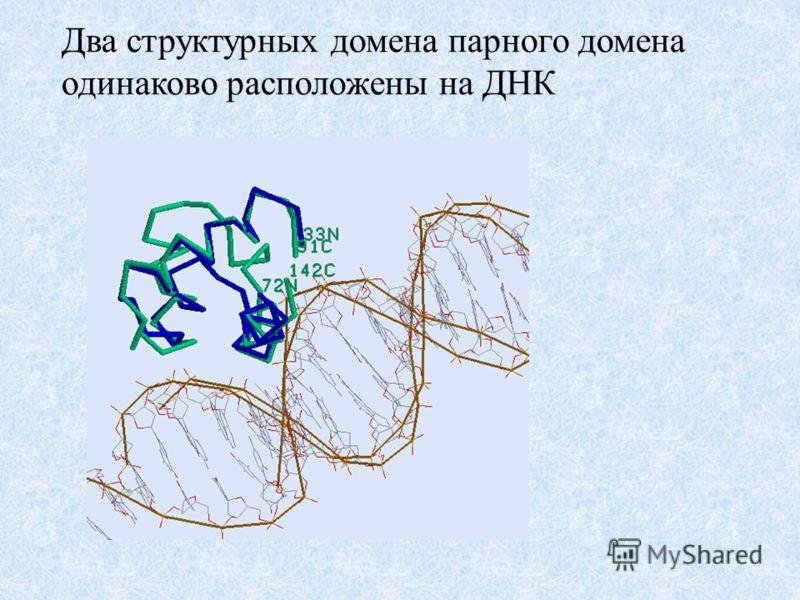 Два структурных домена парного домена одинаково расположены на ДНК