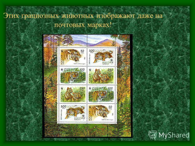 Этих грациозных животных изображают даже на почтовых марках!