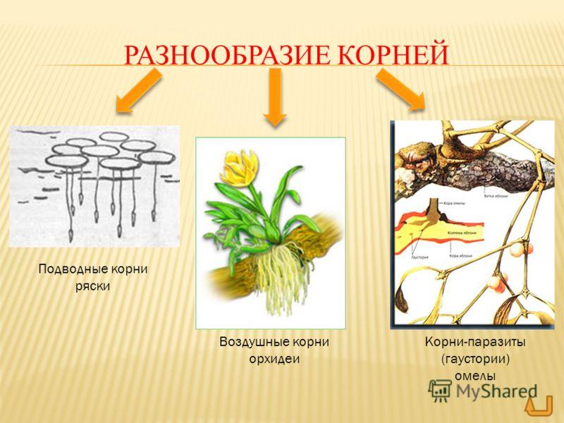 растения против паразитов в организме