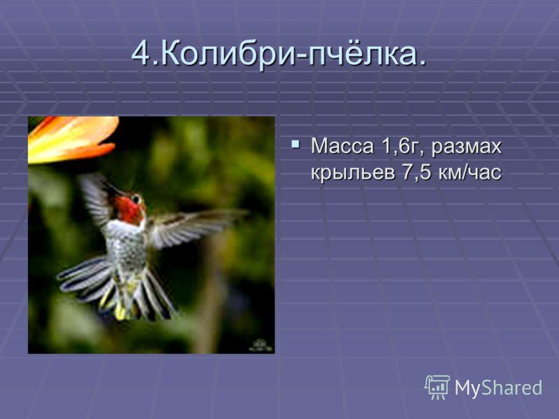 4.Колибри-пчёлка. Масса 1,6г, размах крыльев 7,5 км/час Масса 1,6г, размах крыльев 7,5 км/час