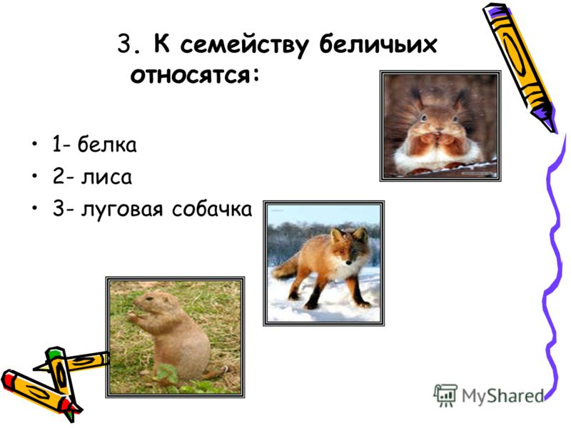 3. К семейству беличьих относятся: 1- белка 2- лиса 3- луговая собачка