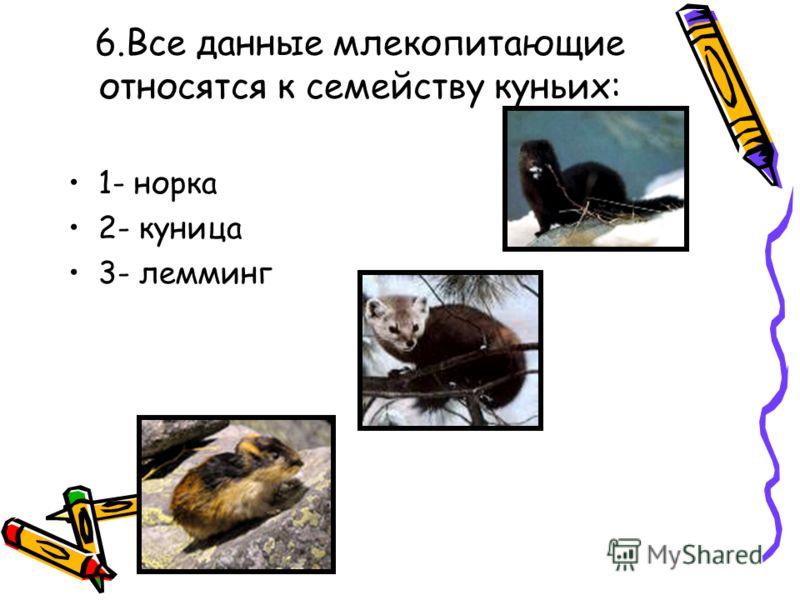6.Все данные млекопитающие относятся к семейству куньих: 1- норка 2- куница 3- лемминг