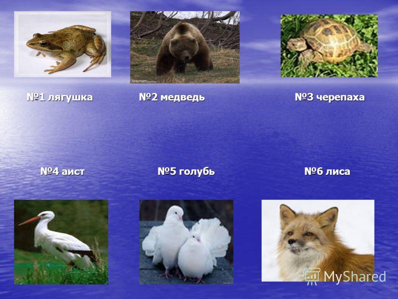 1 лягушка 2 медведь 3 черепаха 1 лягушка 2 медведь 3 черепаха 4 аист 5 голубь 6 лиса 4 аист 5 голубь 6 лиса