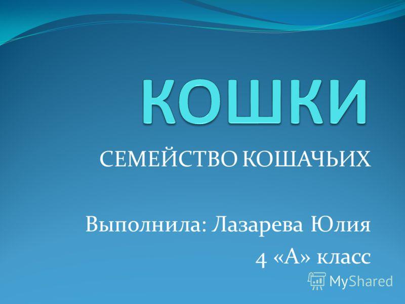 СЕМЕЙСТВО КОШАЧЬИХ Выполнила: Лазарева Юлия 4 «А» класс