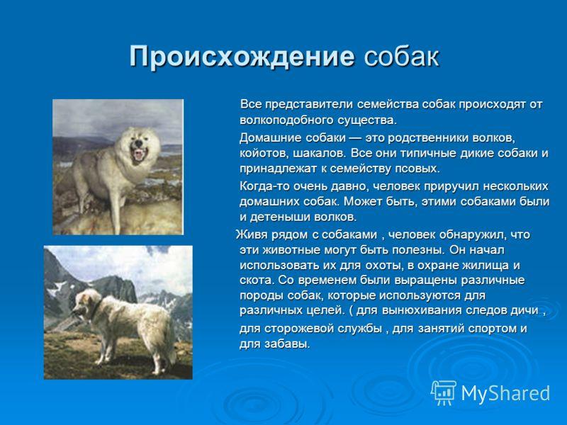 Все представители семейства собак происходят от волкоподобного существа. Все представители семейства собак происходят от волкоподобного существа. Домашние собаки это родственники волков, койотов, шакалов. Все они типичные дикие собаки и принадлежат к