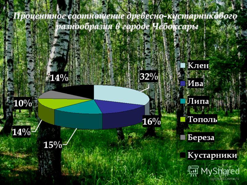 Процентное соотношение древесно-кустарникового разнообразия в городе Чебоксары