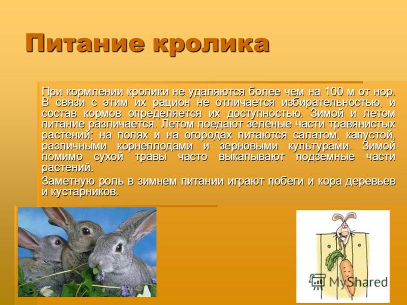 Питание кролика При кормлении кролики не удаляются более чем на 100 м от нор. В связи с этим их рацион не отличается избирательностью, и состав кормов определяется их доступностью. Зимой и летом питание различается. Летом поедают зелёные части травян