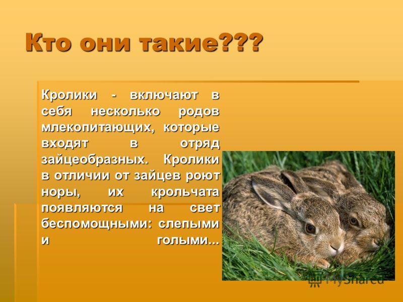 Кто они такие??? Кролики - включают в себя несколько родов млекопитающих, которые входят в отряд зайцеобразных. Кролики в отличии от зайцев роют норы, их крольчата появляются на свет беспомощными: слепыми и голыми...