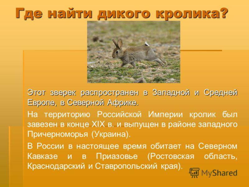 Где найти дикого кролика? Этот зверек распространен в Западной и Средней Европе, в Северной Африке. На территорию Российской Империи кролик был завезен в конце XIX в. и выпущен в районе западного Причерноморья (Украина). В России в настоящее время об