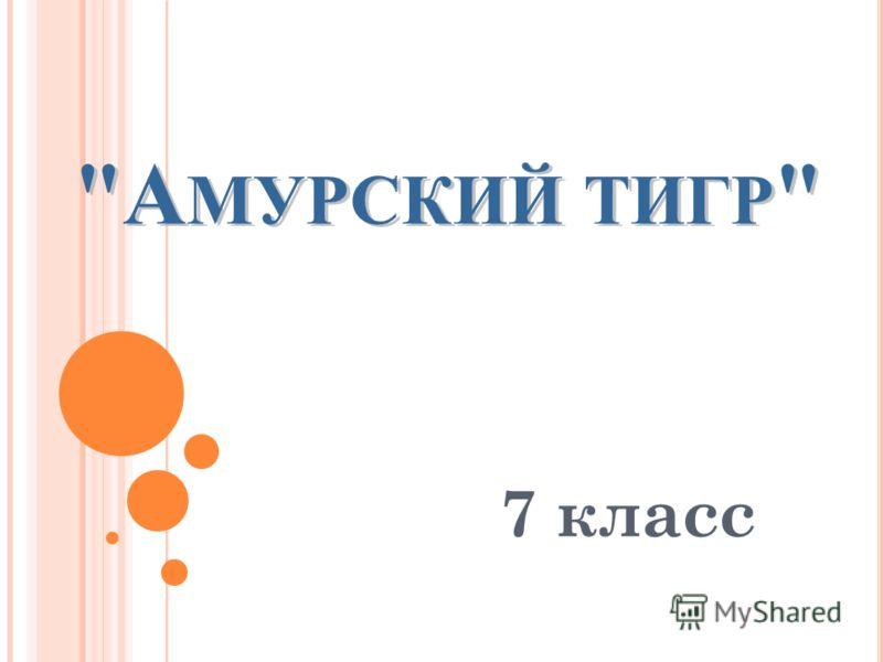 А МУРСКИЙ ТИГР  А МУРСКИЙ ТИГР  7 класс