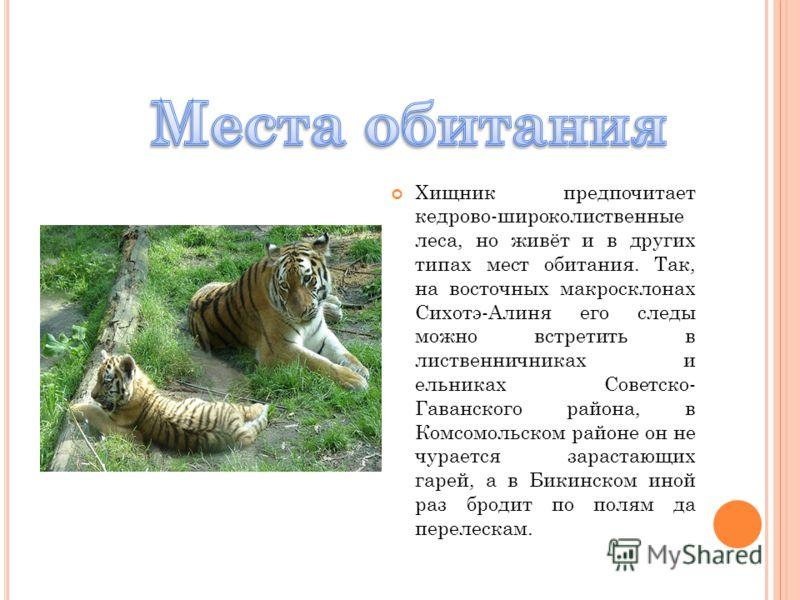 Хищник предпочитает кедрово-широколиственные леса, но живёт и в других типах мест обитания. Так, на восточных макросклонах Сихотэ-Алиня его следы можно встретить в лиственничниках и ельниках Советско- Гаванского района, в Комсомольском районе он не ч