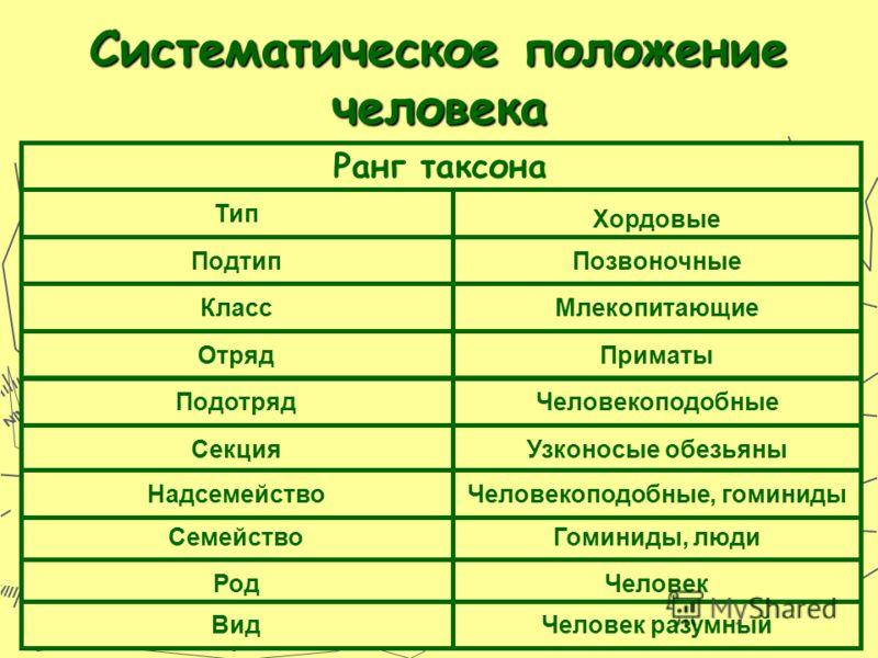 Систематическое положение человека Тип Подтип Класс Отряд Подотряд Ранг таксона Секция Семейство Надсемейство Род Вид Хордовые Позвоночные Млекопитающие Приматы Человекоподобные Узконосые обезьяны Гоминиды, люди Человекоподобные, гоминиды Человек Чел