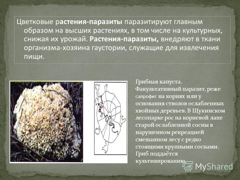 Цветковые растения-паразиты паразитируют главным образом на высших растениях, в том числе на культурных, снижая их урожай. Растения-паразиты, внедряют в ткани организма-хозяина гаустории, служащие для извлечения пищи. Грибная капуста. Факультативный