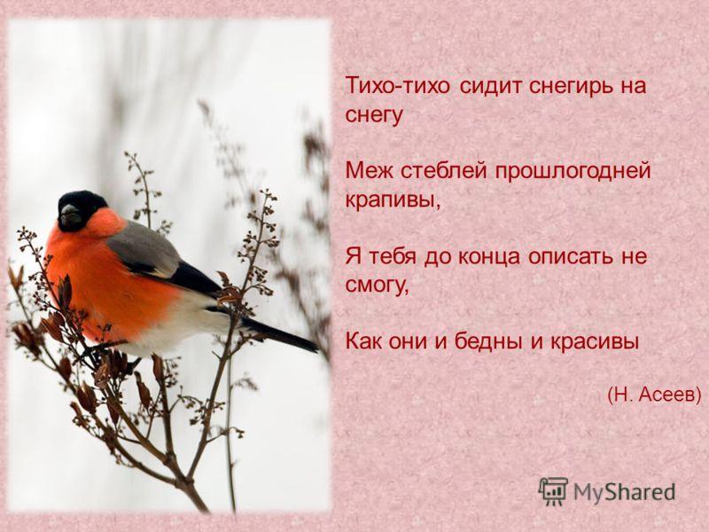 Тихо-тихо сидит снегирь на снегу Меж стеблей прошлогодней крапивы, Я тебя до конца описать не смогу, Как они и бедны и красивы (Н. Асеев)