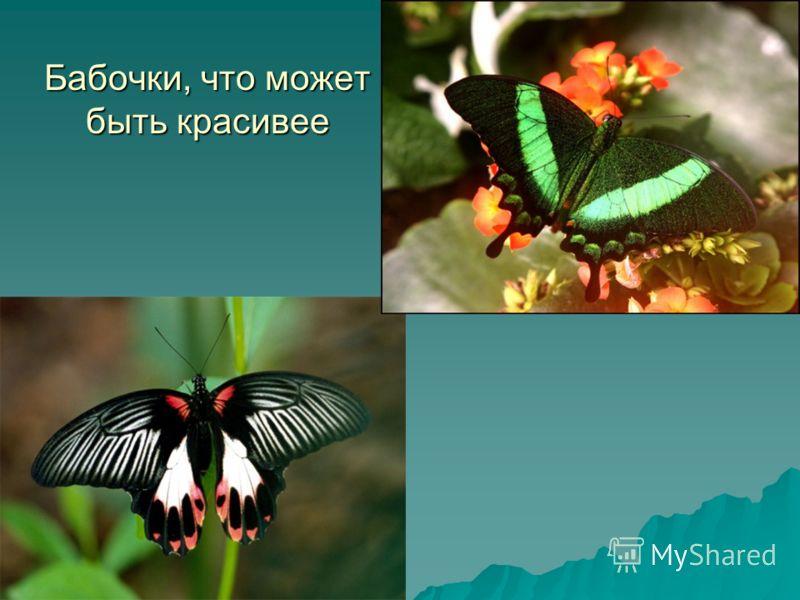 Бабочки, что может быть красивее