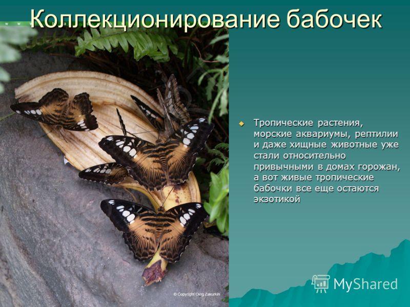 Коллекционирование бабочек Тропические растения, морские аквариумы, рептилии и даже хищные животные уже стали относительно привычными в домах горожан, а вот живые тропические бабочки все еще остаются экзотикой Тропические растения, морские аквариумы,