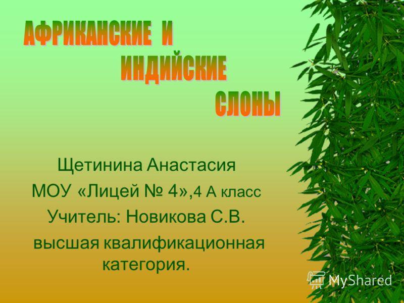 Щетинина Анастасия МОУ «Лицей 4», 4 А класс Учитель: Новикова С.В. высшая квалификационная категория.
