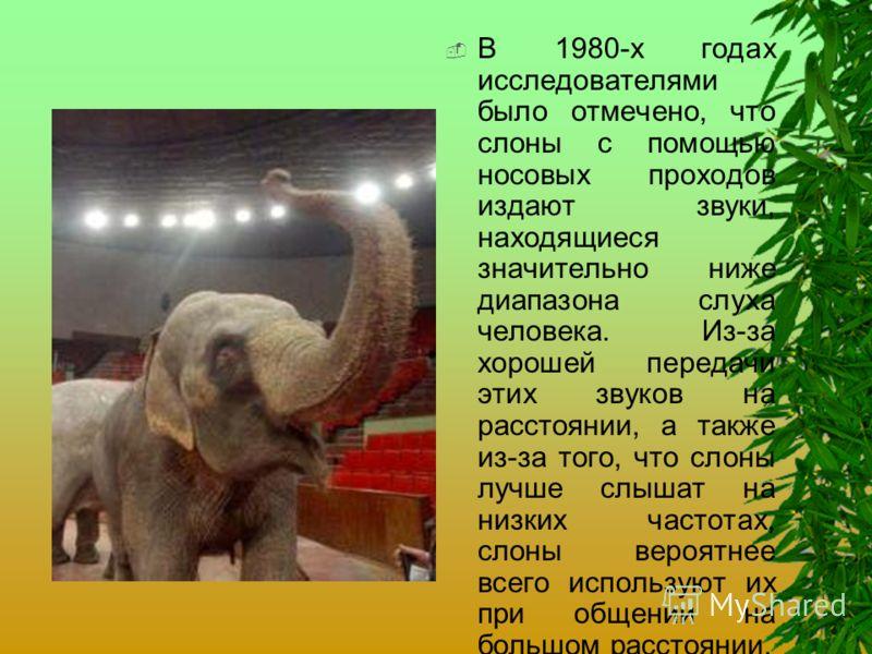 В 1980-х годах исследователями было отмечено, что слоны с помощью носовых проходов издают звуки, находящиеся значительно ниже диапазона слуха человека. Из-за хорошей передачи этих звуков на расстоянии, а также из-за того, что слоны лучше слышат на ни