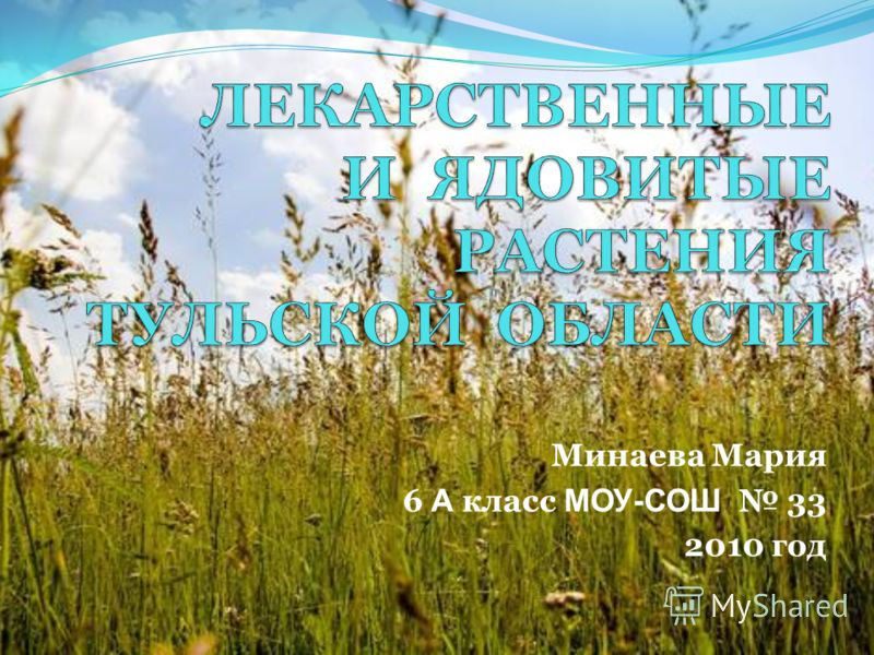 Минаева Мария 6 А класс МОУ-СОШ 33 2010 год