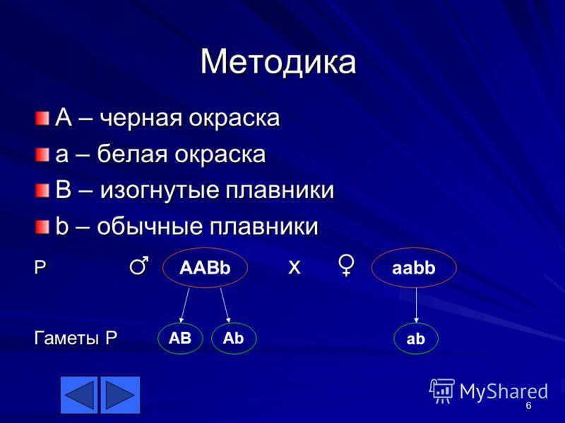 6 Методика A – черная окраска a – белая окраска B – изогнутые плавники b – обычные плавники P x P x Гаметы P AABb ABAb aabb ab