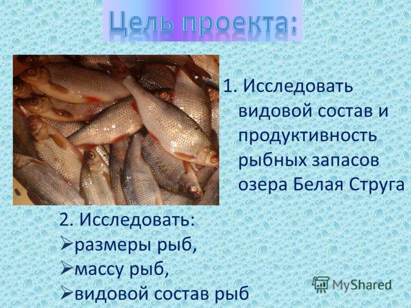 1. Исследовать видовой состав и продуктивность рыбных запасов озера Белая Струга 2. Исследовать: размеры рыб, массу рыб, видовой состав рыб