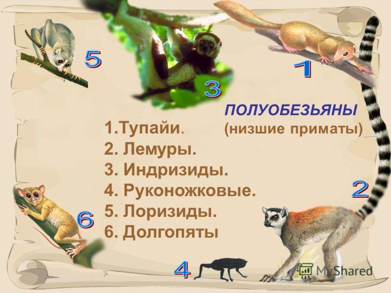 9 Перепишите схему в тетрадь. Классификация отряда: Приматы Полуобезьяны (низшие приматы) 6 семейств Обезьяны (высшие приматы) 5 семейств