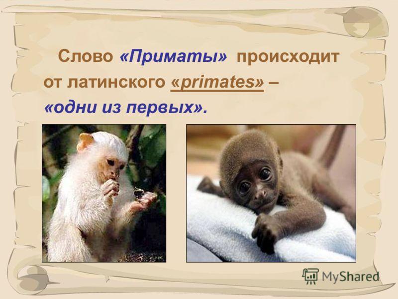 1 ПРИМАТЫ Учитель биологии Курова Екатерина Евгеньевна