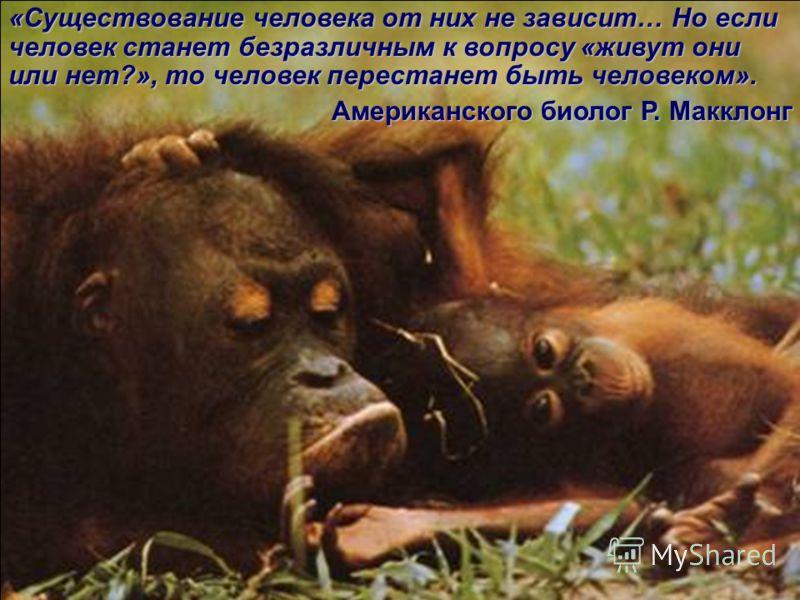 48 Кроме этого, приматы обладают и набором качеств показывающих их социальное развитие.