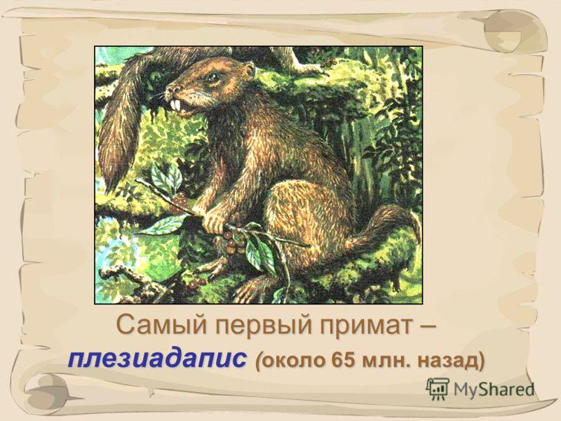 4 Запишите в тетрадь определение и автора термина «приматы». «Приматы» -«одни из первых». ( от латинского «primates» ) Термин «приматы» ввел в 1758г. шведский естествоиспытатель Карл Линней (1707-78гг.).