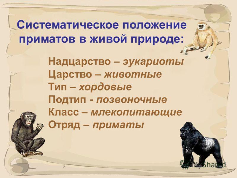 6 Египтопитек
