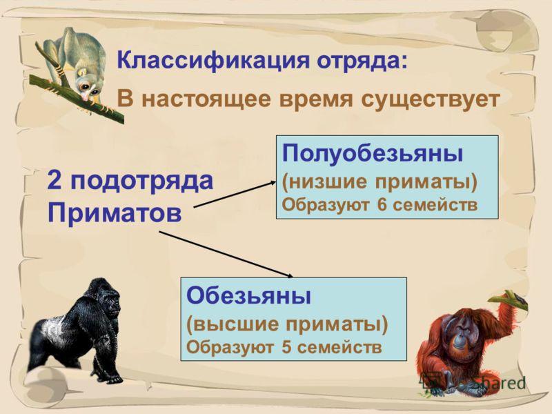 7 Систематическое положение приматов в живой природе: Надцарство – эукариоты Царство – животные Тип – хордовые Подтип - позвоночные Класс – млекопитающие Отряд – приматы